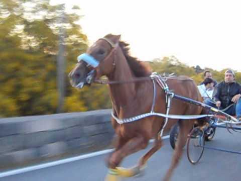 Palermo, corse di cavallo clandestine: sequestrato un equino