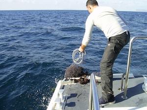 Siracusa, sub multato dalla Capitaneria: pescava ricci a Santa Panagia