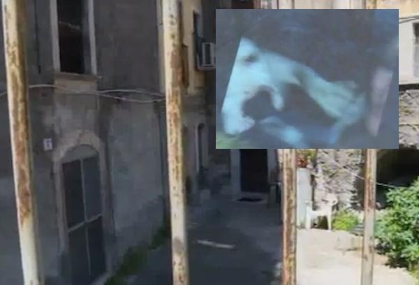 Catania, un bimbo di 20 mesi azzannato alla testa da un pitbull: è grave