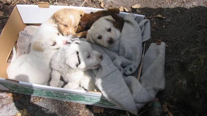 Avvelenati a Ragusa sei cuccioli di cani: si indaga