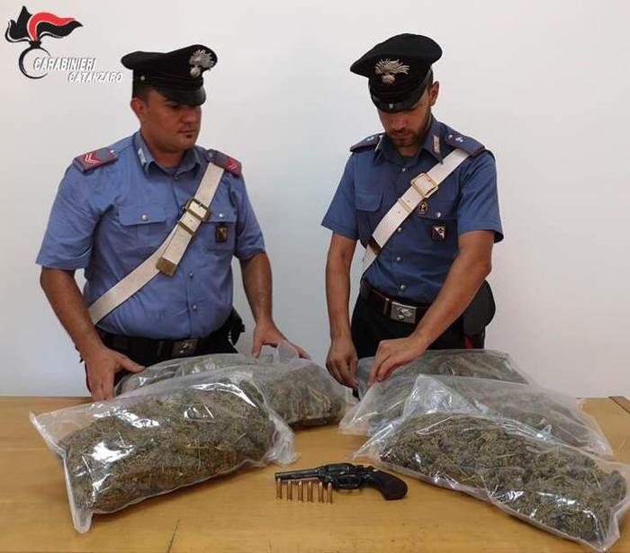 Scoperta una piantagione di cannabis in provincia di Catanzaro, un arresto