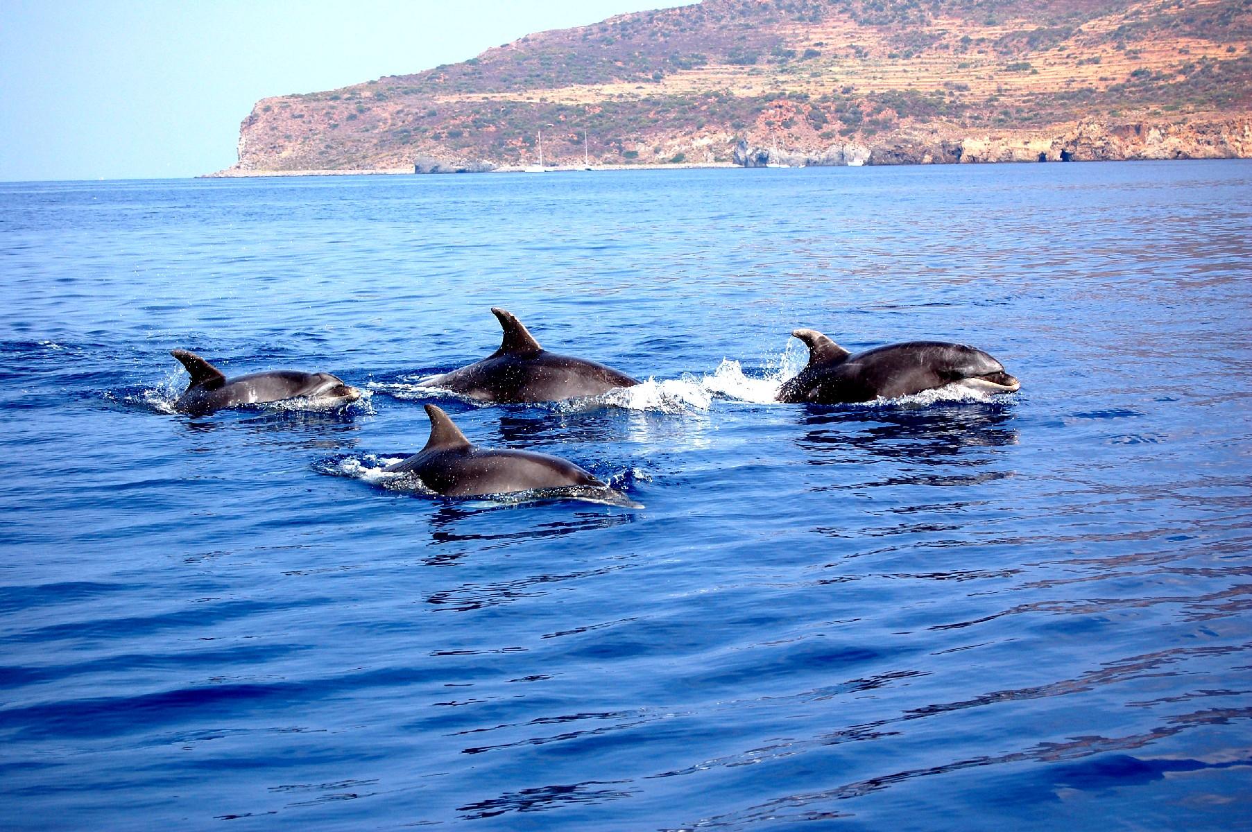 Il mare delle Eolie invaso dai delfini: allarme dei pescatori per le reti