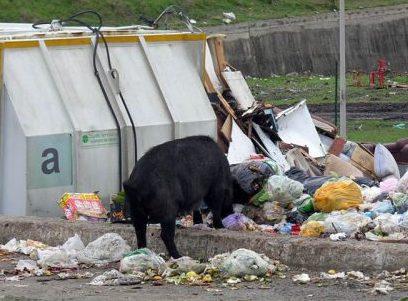 Diossina in grasso maiali, azienda sequestrata a Milazzo