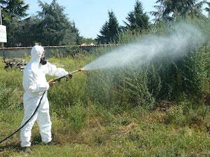 Pachino, al via la disinfestazione contro mosche e zanzare