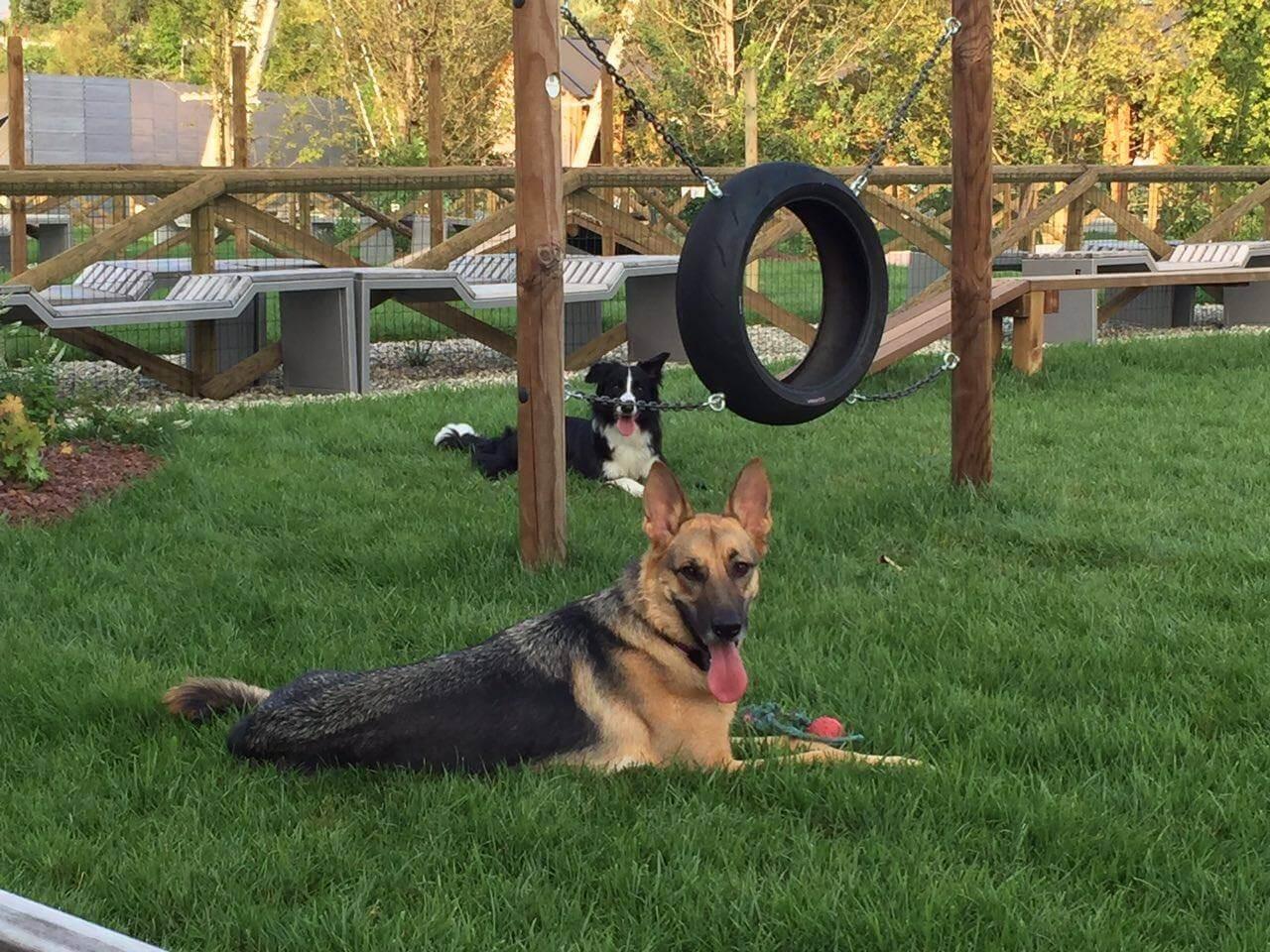 Siracusa, una dog area in piazza Adda: lunedì la presentazione