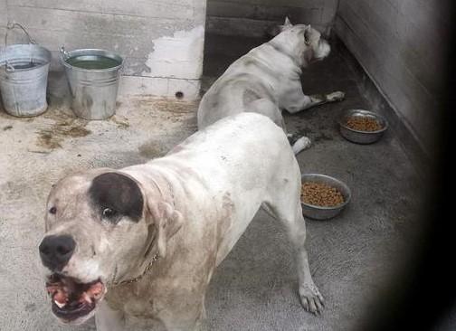 Il bimbo sbranato dai cani a Mascalucia, il Ris acquisisce le immagini