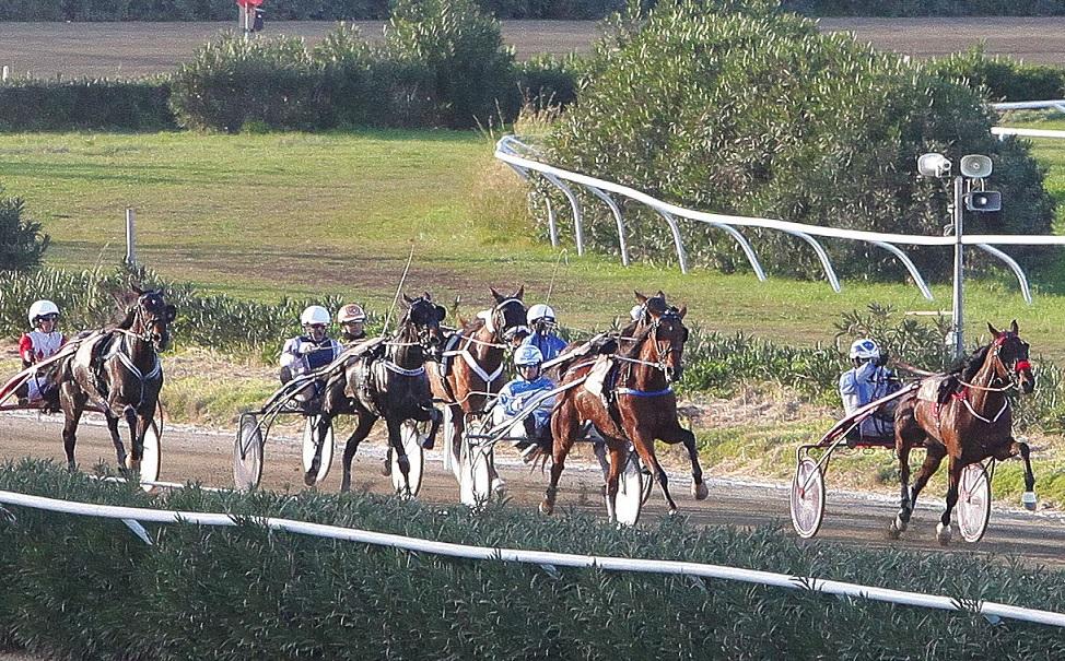 Domani Trotto a Siracusa, Albaricoque favorita nella seconda corsa ( I partenti)