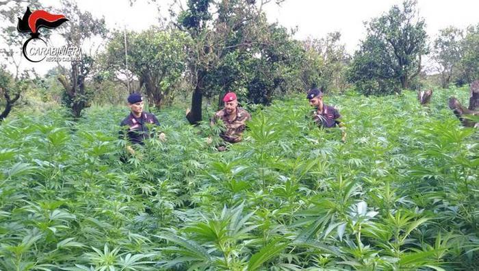 Reggio Calabria, sequestrati 13 milioni di dosi di droga e arresti