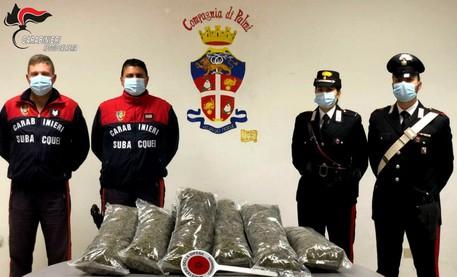Sette chili di marijuana nel gavone della barca: 2 arresti a Bagnara