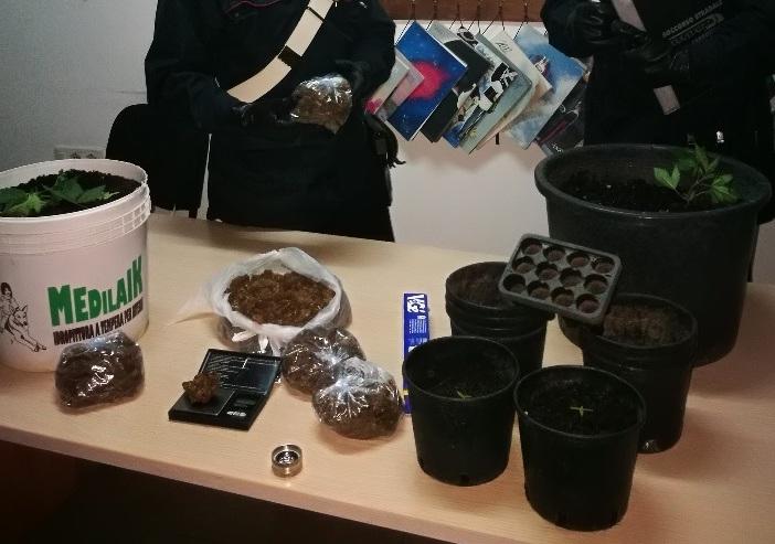 Lentini, gli trovano in casa 800 grammi di marijuana e tre piantine