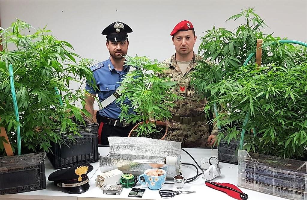 Mineo, coltivavano cannabis in casa: un arresto e una denuncia