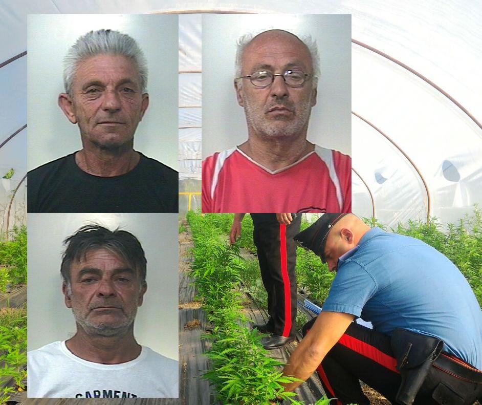 Coltivavano 7500 piante di cannabis: tre in carcere a Noto