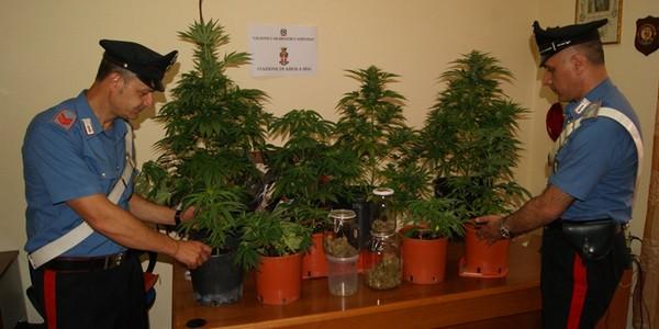 Droga, oltre 2600 piante di cannabis in un terreno demaniale nel Napoletano