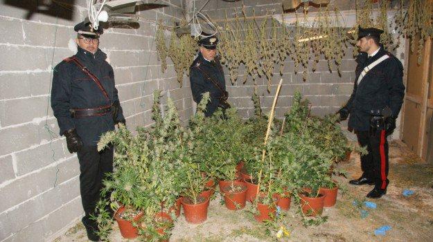 Coltivava 78 piante di marijuana: ventottenne arrestato a Palermo