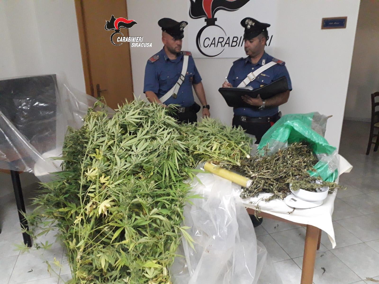 Scoperta a Portopalo di Capo Passero coltivazione di cannabis: un arresto