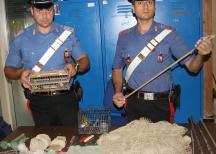 Palermo, denunciati 3 bracconieri: cacciavano cardellini