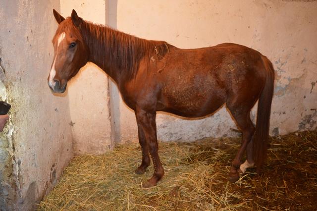 Catania, trovati in un edificio vestiti rubati e un cavallo maltrattato