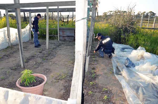 Vittoria, coltivavano più di 100 piante di marijuana: due arresti