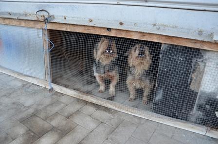 Catania, cani al buio e con poca aria: indagati i responsabili