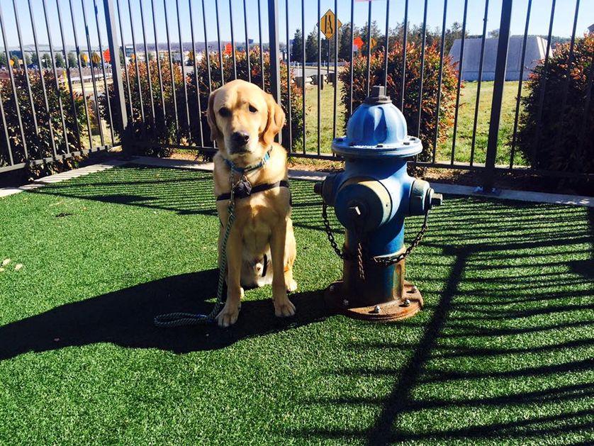 """Siracusa, """"un'area per cani in piazza Adda"""": domani la conferenza"""