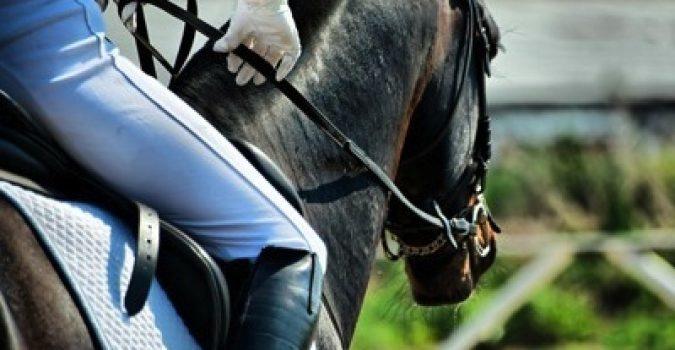 San Giuseppe a Melilli all'insegna di spettacoli equestri