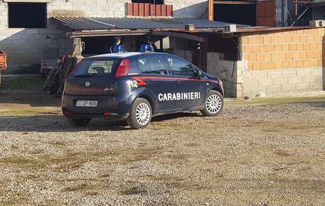 Irregolarità, sequestrata un'azienda zootecnica vicino a Reggio Calabria