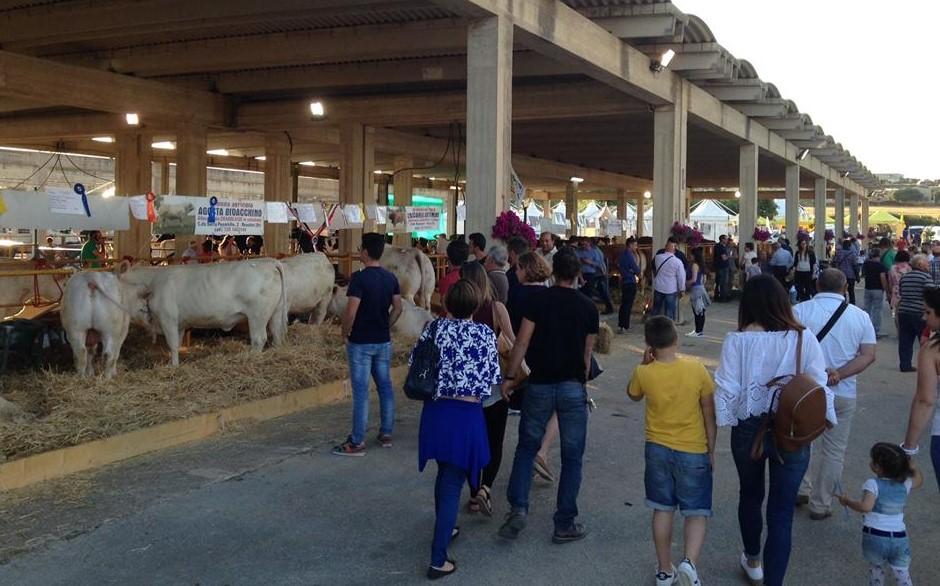 Modica, dal 21 al 23 giugno al foro boario la terza Fiera Agricola Mediterranea