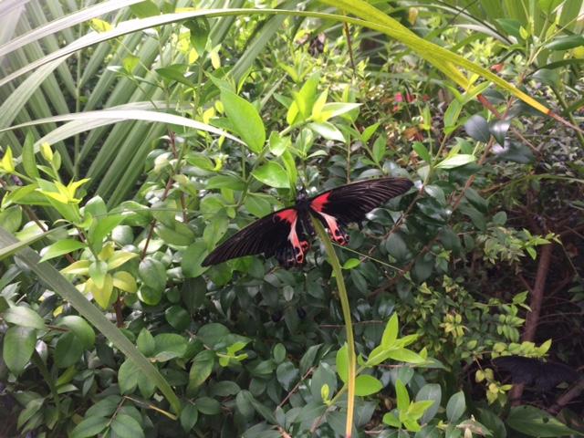 Siracusa, inaugurata la Casa delle Farfalle