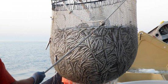 Pesca, in Sicilia fermo dal 25 settembre al 31 ottobre