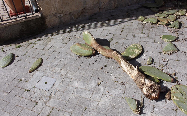 Modica, piante di fichi d'India sulla strada dal costone del Castello