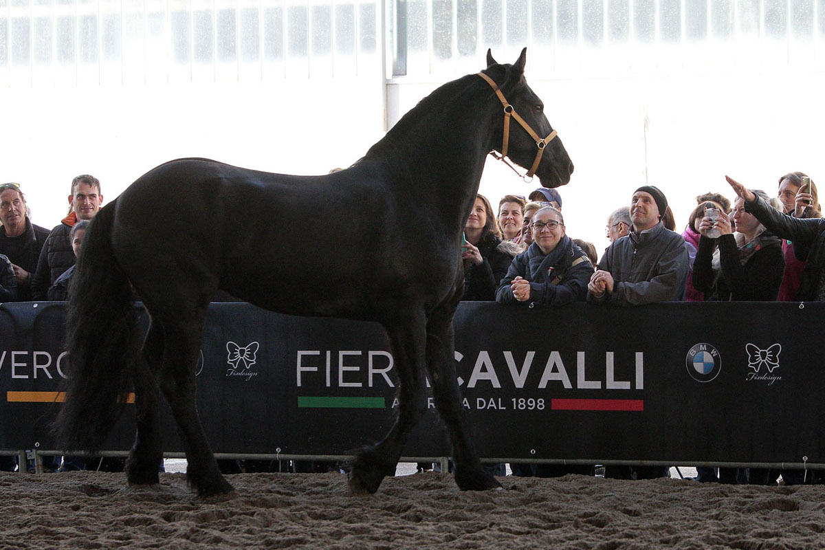 "La Regione siciliana torna a ""Fieracavalli"" di Verona"