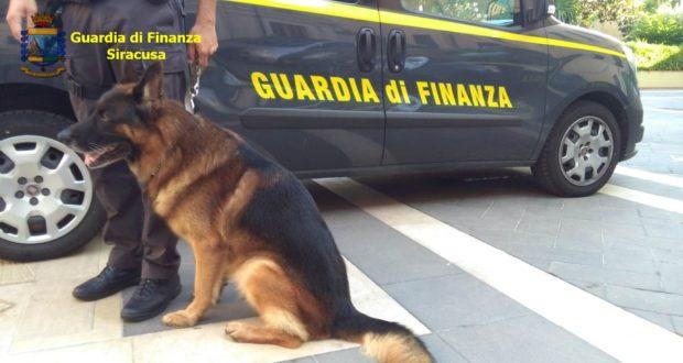 Cani della Finanza di Siracusa fiutano la droga: un arresto a Pozzallo
