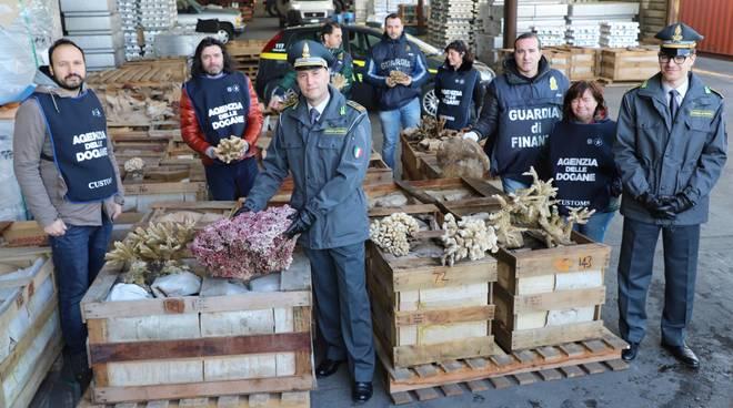 Otto tonnellate di coralli in via d'estinzione sequestrate a Genova