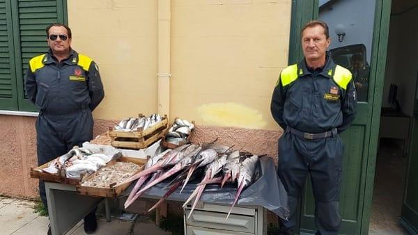 Pesce non tracciabile, sequestrati 66 chili di pesce spada a Palermo