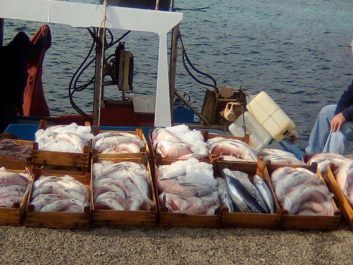 Pesca, progetto pilota per Fish food di strada: a Palermo camion per la ristorazione