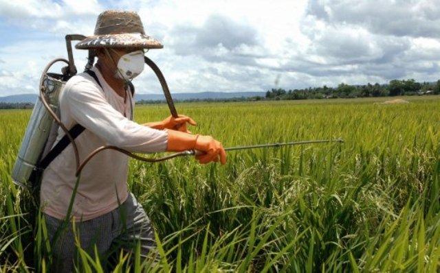 Patentini fitosanitari a Pachino, parte il primo corso di formazione