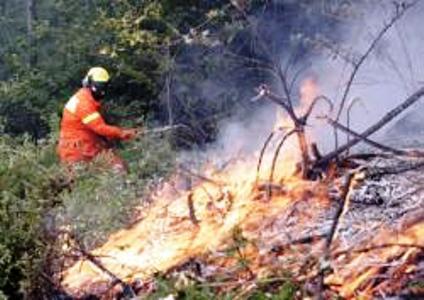 I sindacati reclamano il piano di riordino dei forestali