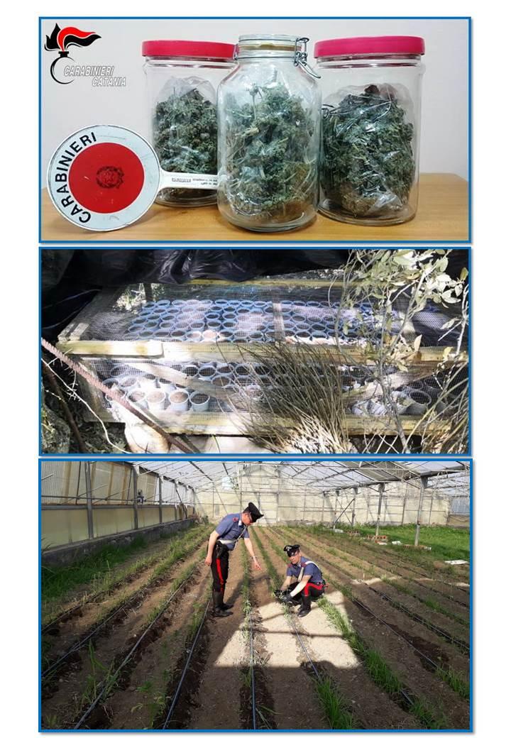 Scoperta piantagione di marijuana: 2 arresti a Randazzo