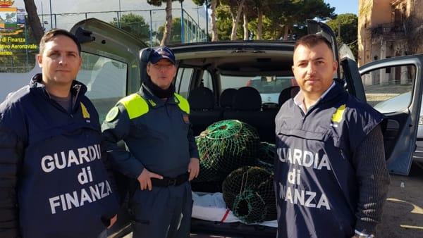 Palermo, la Finanza sequestra novellame di sarda e ricci di mare