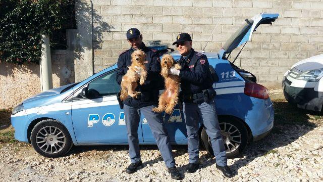 Siracusa, ritrovati altri 8 cani di proprietà della donna trovata morta in casa