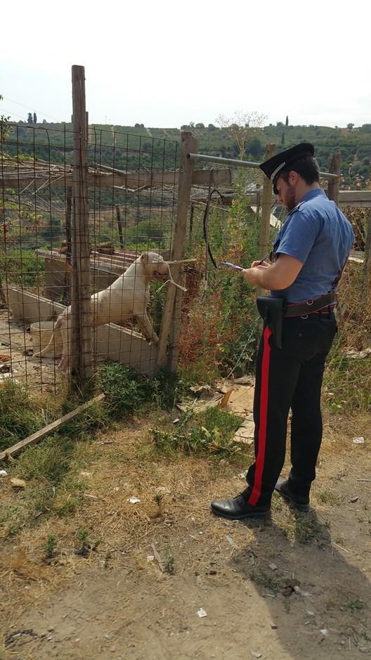 Francofonte, teneva 7 cani in ambienti fatiscenti ed in pessime condizioni igieniche: denunciato