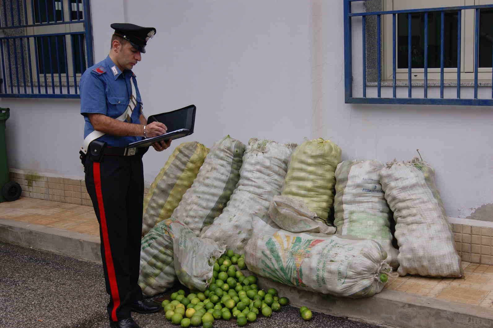 Siracusa, sorpresi a rubate 500 chili di limoni