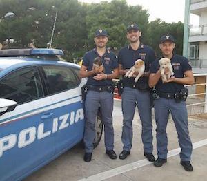 Siracusa, la polizia salva tre cuccioli da morte certa