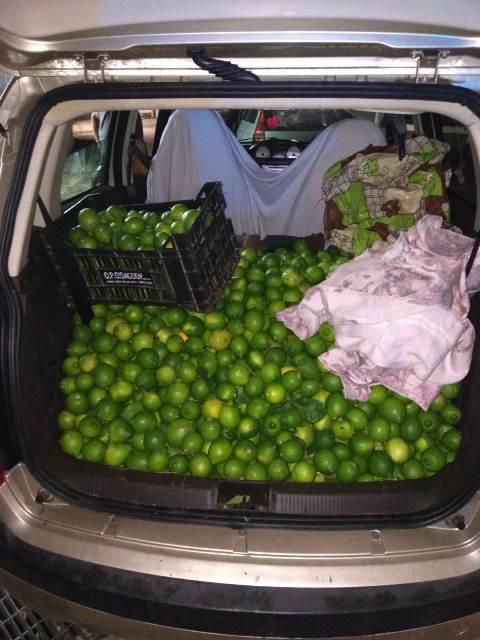 Beccati con mille chili di limoni rubati: tre arresti a Siracusa