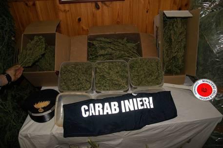 Francofonte, 150 chili di droga su un tir di frutta e verdura