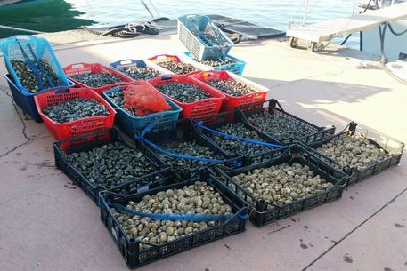 Napoli, la Finanza sequestra trecento chili di frutti di mare