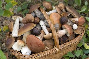 Ragusa, arriva la prima edizione della Fiera del fungo