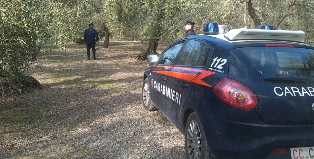 Modica, aumentano i furti nelle zone rurali: il sindaco chiede più controlli