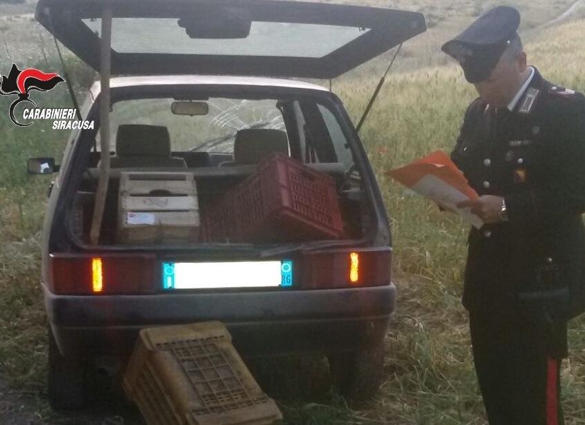 Furti: ruba 80 chili di melograni, arrestato 41enne a Siracusa