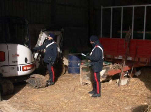 I carabinieri sventano il furto di cinque bovini a Pedagaggi